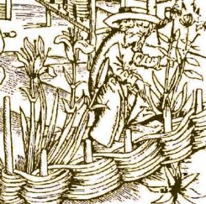 medieval_gardener2
