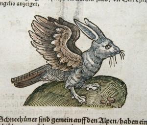Rabbit-Bird illustration from Pliny