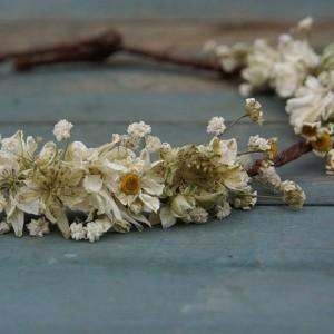 wisteria_dearling